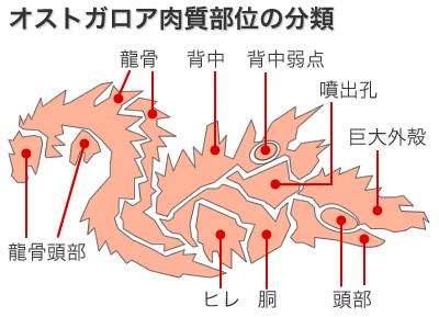 オストガロアの攻撃時の肉質部位の分類